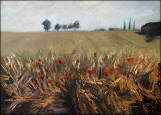 Fields of Summer, Öl-Lwd.50x70cm