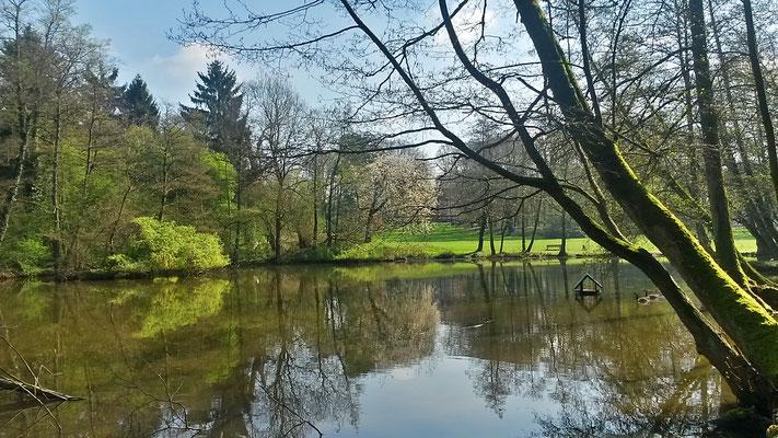 Wir erreichen den Teich als Bestandteil des Parks