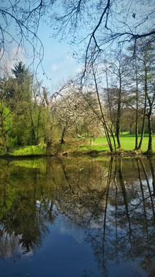 Im Teich spiegelt sich der Frühling