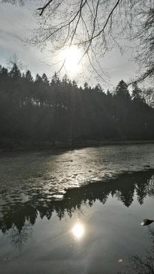 Wald und Wasser am Milchborntalweiher