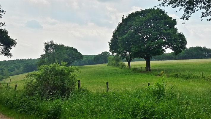 Landwirtschaftliche Nutzung -eher selten zu sehen