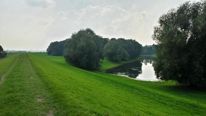 Rheinarm und Rheindeich