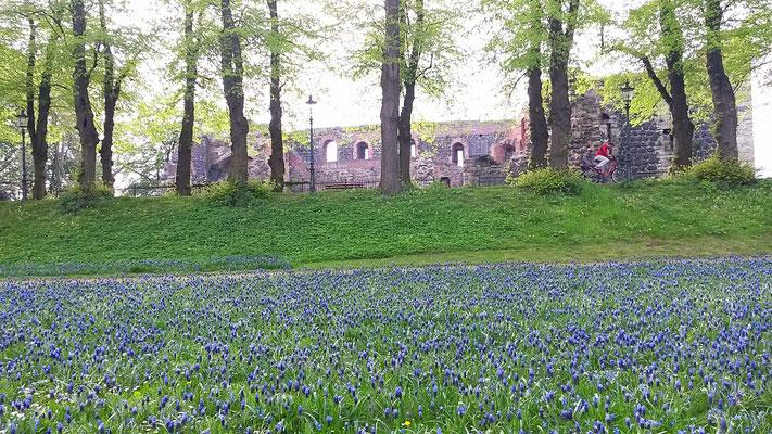 Die Pfalz mit Blumenteppich