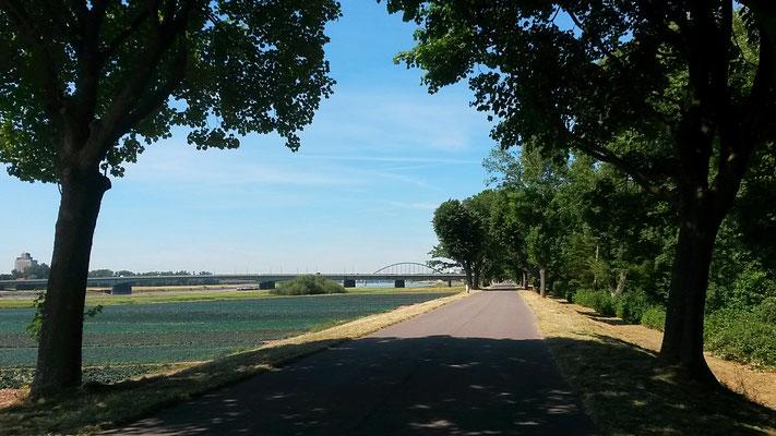 Auf dem Rheindeich bei Hamm