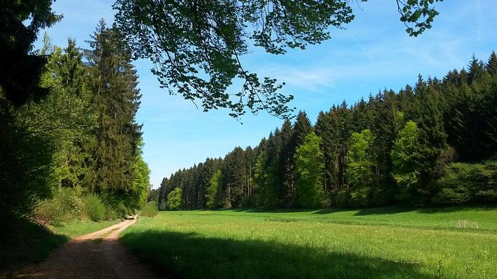 Tannenwald im Lampertstal
