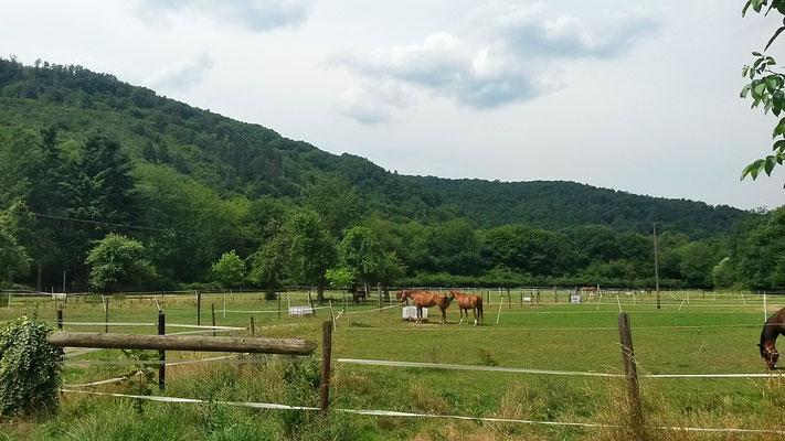 Gut Mausauel, Blick vom Wohnmobilstellplatz auf die Pferdekoppeln