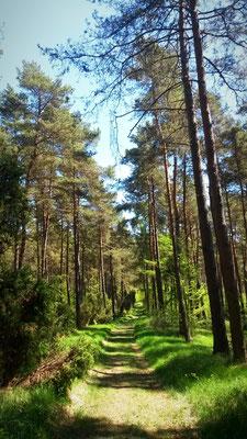 Wald- und Wiesenwege