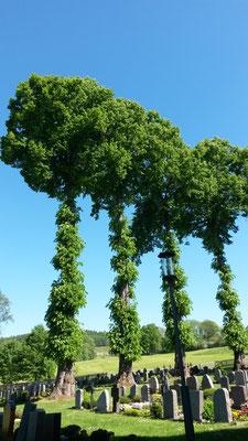 Beeindruckende Bäume auf dem irchfriedhof