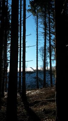 Blauer Himmel, weisser Schnee, dunkler Wald