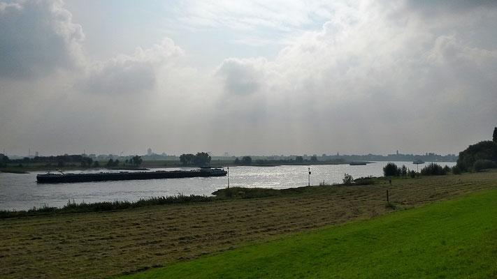 Rückblick auf Uerdingen aus der Rheinaue