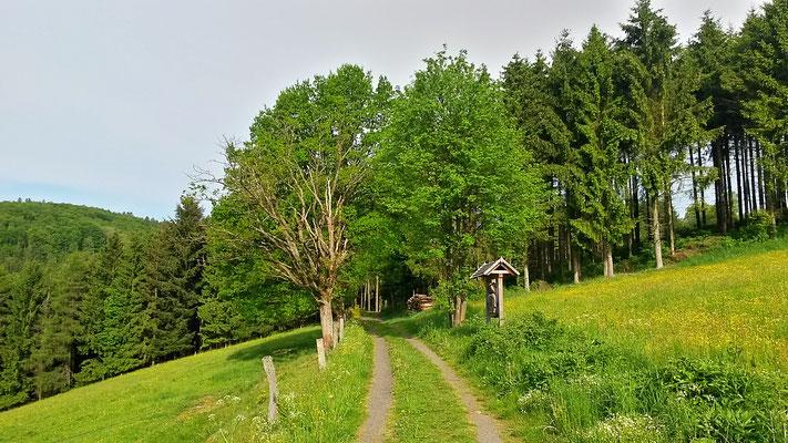 Auf dem Trail, unweit des Hofes