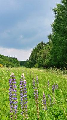 Blühende Wildblumen-Wiese entlang des Weges