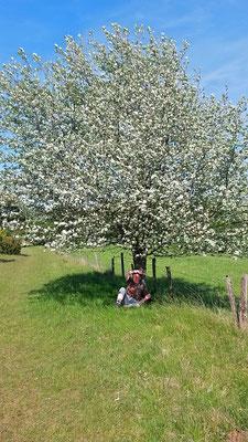 Pause im Schatten eines silbrig glänzenden Baumes