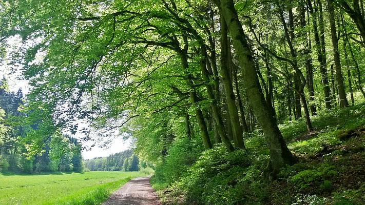 Laubwald im Lampertstal