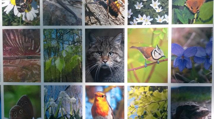 Artenreiche Naturvielfalt