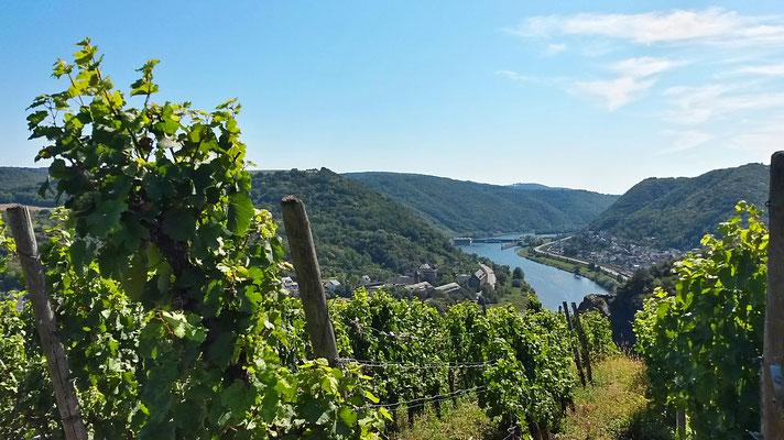 Weinanbau und Moselstaustufe