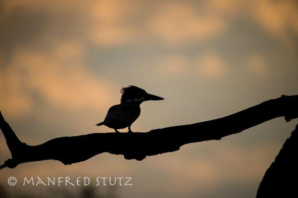 Die Vogelwelt am Karibasee… einfach Fantastisch!!!