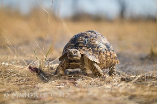 Zu Fuss unterwegs im Hwange Nationalpark