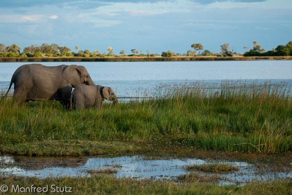Noch mehr Elefanten...