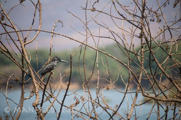 Auf Pirschfahrt im Mana Pools Nationalpark