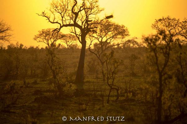 KNP: Unvergleichlicher Sonnenuntergang