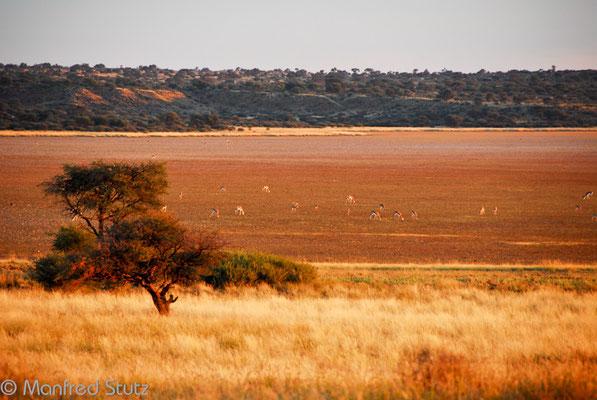 KNP: Aussicht von der Campsite Mabuasehube