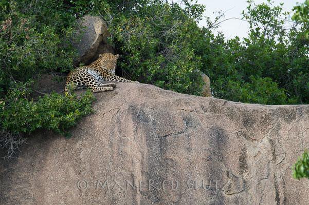 Zuerst sahen wir nur diesen Leoparden-Mann. Doch dann...
