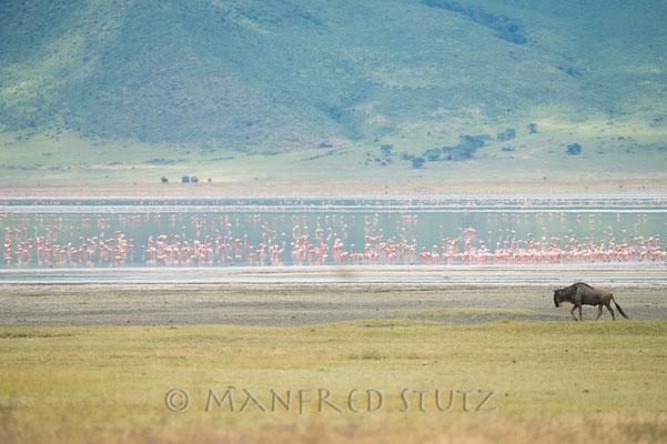 Kratersee mit Flamingos