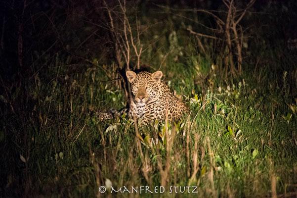 Gamedrive Makakatana Bay Lodge: Leopard bei Nacht