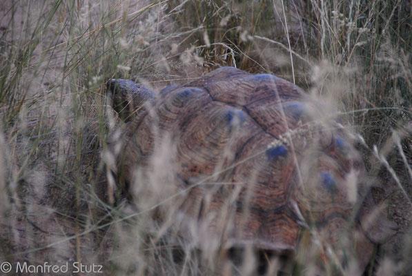 KNP: Schildkröte