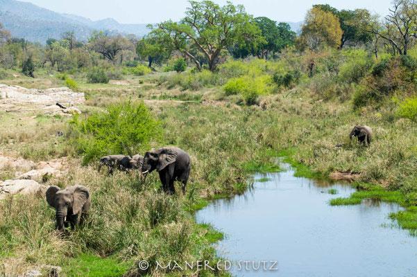 KNP: Elefanten