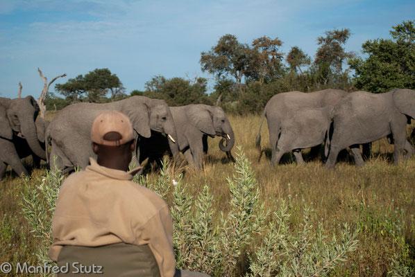 Die Elefanten hätten wir auch alleine entdeckt...