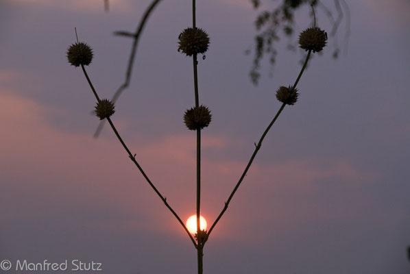Selous GR: Abendstimmung