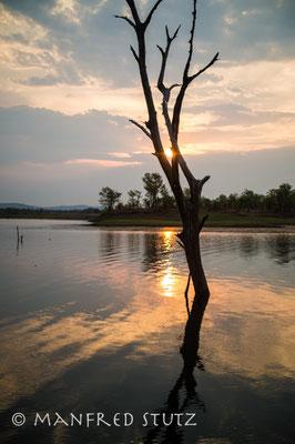 Die toten Bäume im Wasser sind nicht nur für Fotografen wunderschön