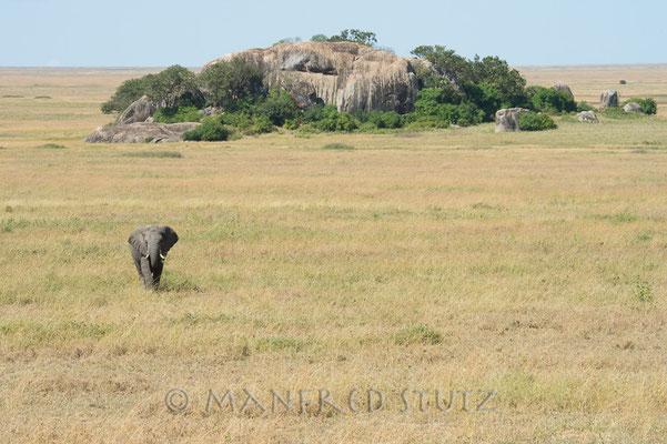 Die grauen Riesen sind immer einen Foto-Stop wert