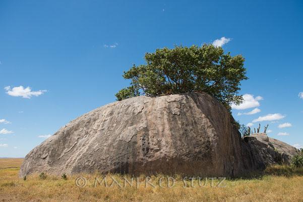 Diese schönen Felsinseln laden zum Hochklettern ein, doch Vorsicht, auch die Raubtiere nutzen sie als Aussichtspunkt.