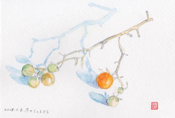 mini tomato in winter 冬のミニトマト watercolor 水彩スケッチ