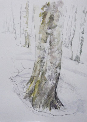 A beech tree in The Tanpara  Highlands       玉原高原のブナ   watercolor 水彩F6号