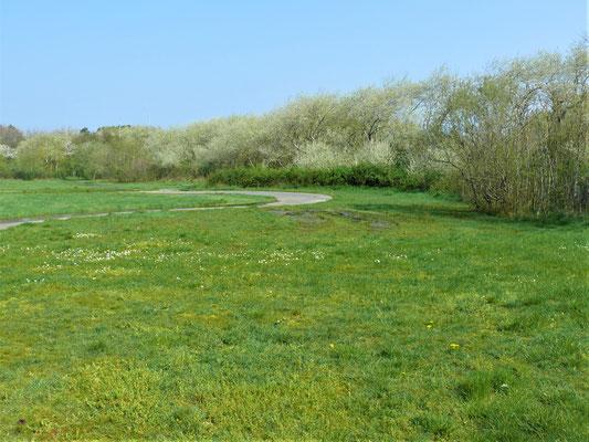 't Paelsteenveld: achter dat weiland wordt gewandeld