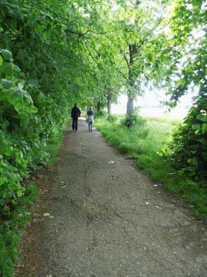 Aan de kasteelweg van domein Ter Linden