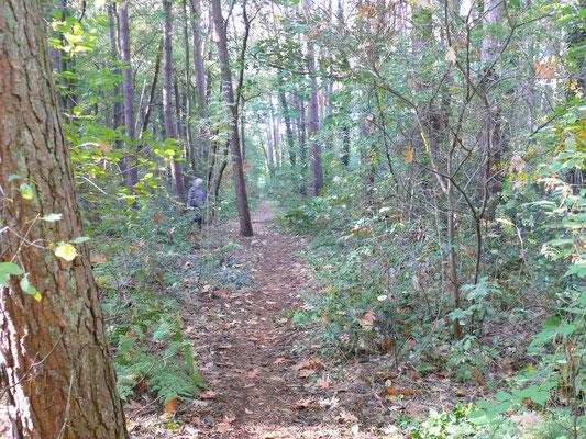 terug het bos in