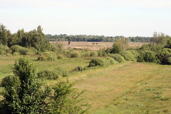 Umbruch von Moor in Weide- und Ackerland