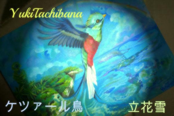 ケツァール鳥 立花雪 YukiTachibana