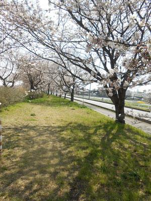 桜樹のシルエット あおい夢工房 炎と楽園のアート ちょっと一息