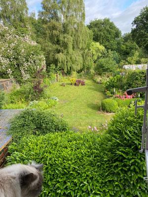 Blick aus dem Fenster in den parkähnlichen Garten hinterm Haus