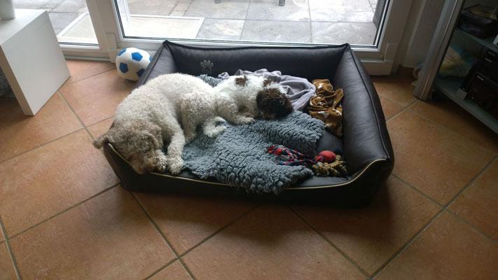 Ahhh, spielen macht auch sooo müde...