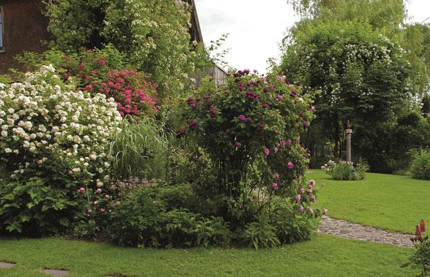 Dreierlei Rosen am Monetschirm im Westallgäuer Rosengarten