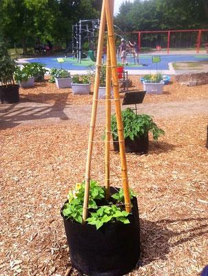Sac de jardinage en géotextile à l'avant plan et jardinières à double fond Alternatives à l'arrière.
