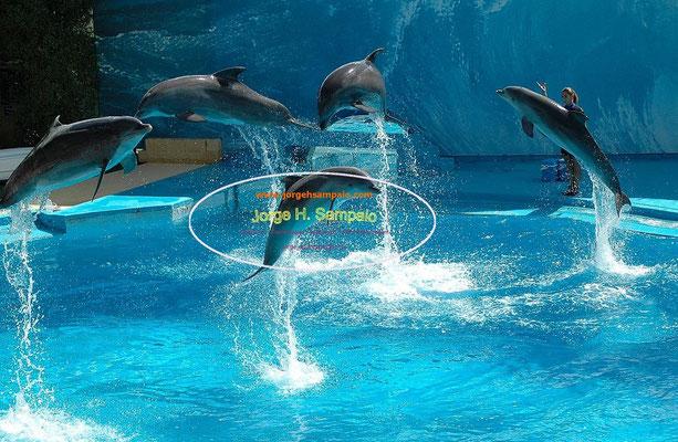 Golfinhos - Zoomarine