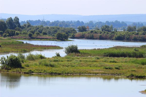 Altmühlsee (Foto: Peter Bria, LBV-Bildarchiv)